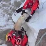 Coast Guard Rescues Dog from Icy Michigan Lake (VIDEO)