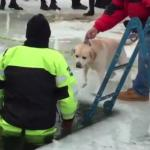 Polar Plunge No Place for Pups (VIDEO)