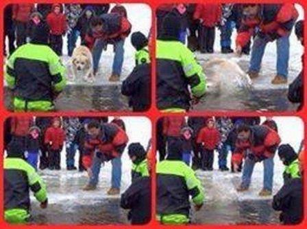 dog in massachusetts polar plunge