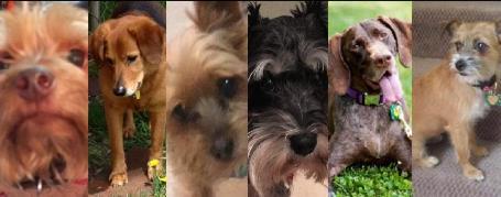dogs stolen in doggie day care van