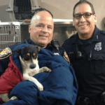 Fort Worth Police Officers Stop Highway Traffic to Rescue Small Dog (VIDEO)
