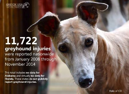 grey2k usa greyhound racing report