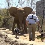 USDA Orders Pittsburgh Zoo to Stop Stressing Elephants with Herding Dogs