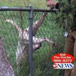 News Photographer Rescues Dog Hanging from Chain Link Fence