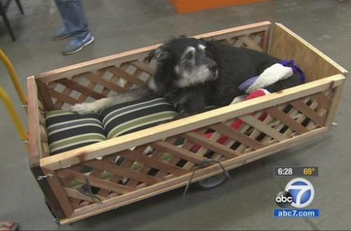 home depot employees build wagon for dog