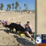 Rescued Bernese Mountain Dog Rescues Couple Caught in Rip Current