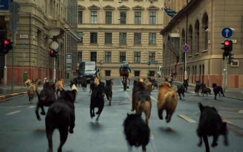 White God movie dogs running