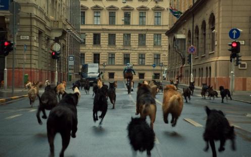 White God movie dogs running