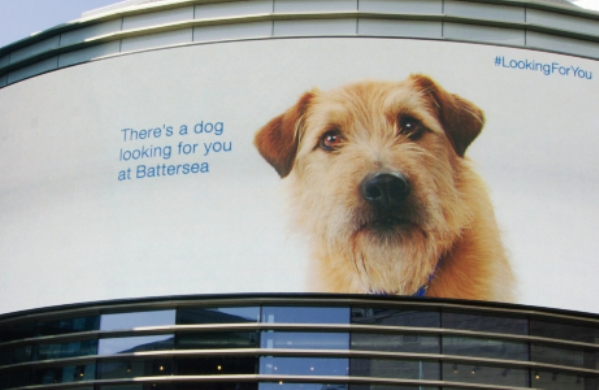 Battersea LookingForYou billboard
