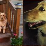 Golden Retriever Dies After Being Left in Petco Drying Cage