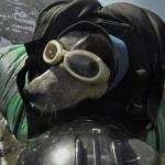 BASE Jumper Who Often Brought Dog along Killed in Accident