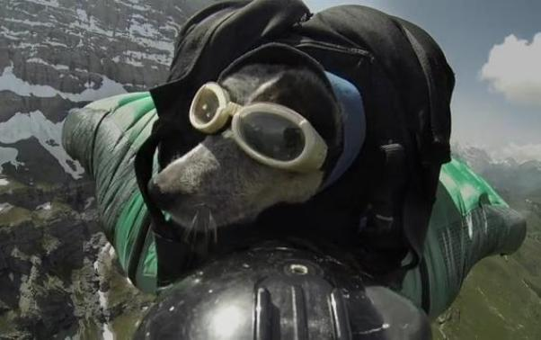Dean Potter BASE jump with dog