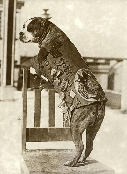 Working dog Sgt. Stubby
