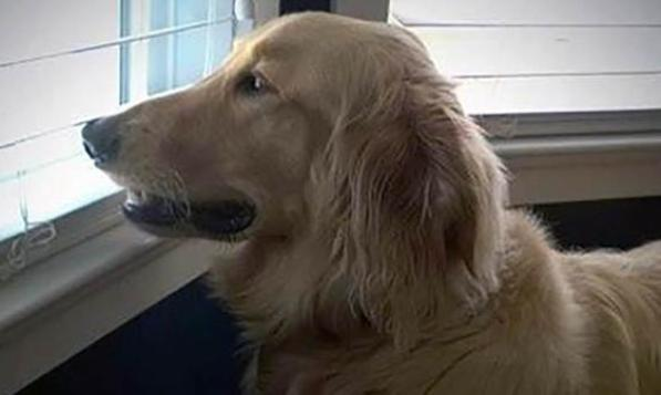 Colby dog died in Petco drying cage