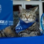 What the What? Cat Wins spcaLA 2015 Hero Dog Award
