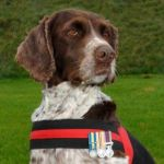 RIP Buster, Bomb-Sniffing Dog Who Saved a Thousand Lives