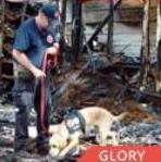 Glory Arson Dog finalist AHA Hero Dog Awards