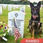 Rambo Military Dog finalist AHA Hero Dog Awards