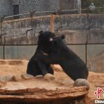 After 2 Years, Man Realizes His Dogs Are Actually Asian Black Bears