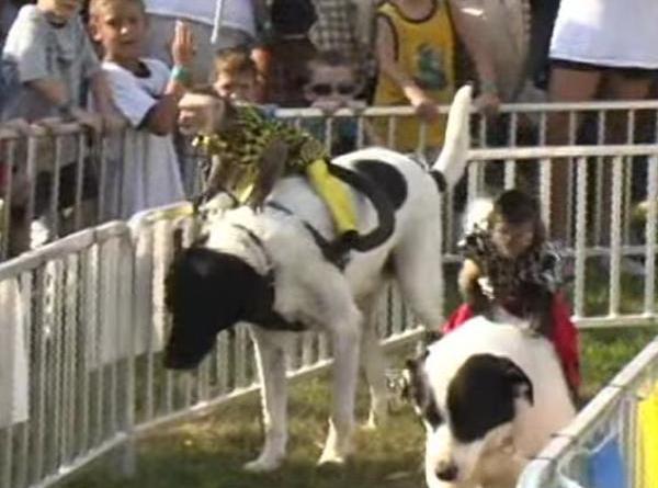 Banana Derby monkey jockeys on dogs