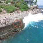 Drone Captures Big Wave Knocking Small Dog off Hawaii Cliff (He's Okay)