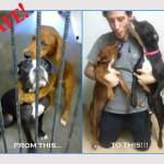 'Hugging' Shelter Dogs Rescued Together Hours Before Being Euthanized
