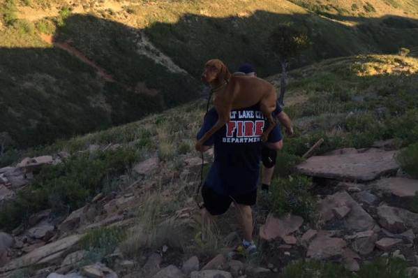 salt lake city firefighter carries dog to safety