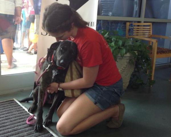 Clear the Shelters Day dog adopted