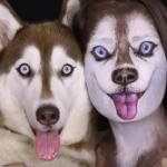 Want to Use Makeup to Look Like Your Dog? Here's How
