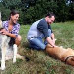 10 Years Later, Rescued Katrina Dogs Reunite