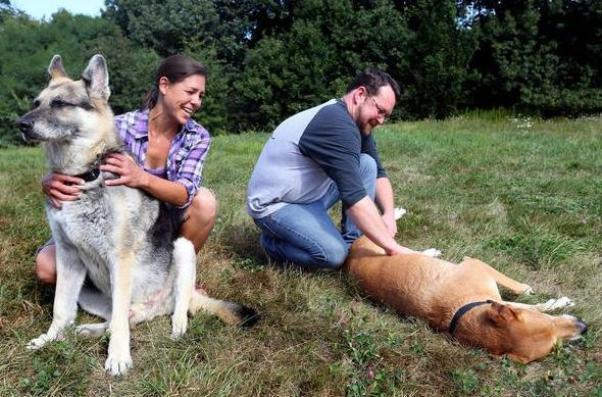 Katrina dogs reunite in Ohio