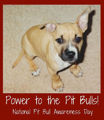 Pit Bull Awareness Day