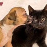 Puppy and Kitten BFFs Chicken & Waffles Need a Forever Home