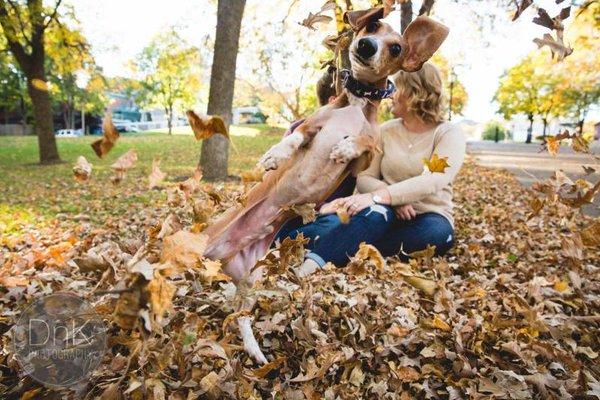 dachshund photobombs engagement photo