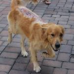 Were Burned L.A. Dogs Victims of the Sun, Not Abusers?