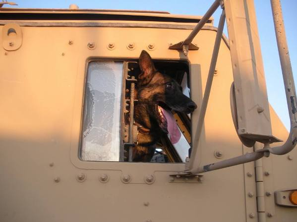 Major Mike military dog shot by bicyclist