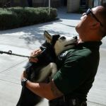Husky Rescued after Car Chase Adopted by LAPD Detective