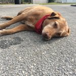 Heartbroken Dog Stays by Woman's Side after She's Fatally Hit by Truck