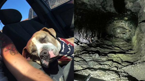 pit bull rescued from mine shaft