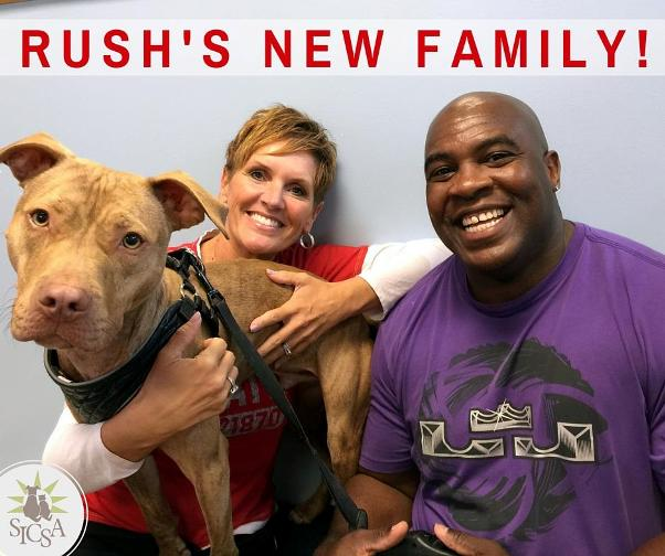 rush-pit-bull-makes-own-bed-new-family