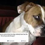 3 Women Make Disturbing Facebook Posts About Their Dogs