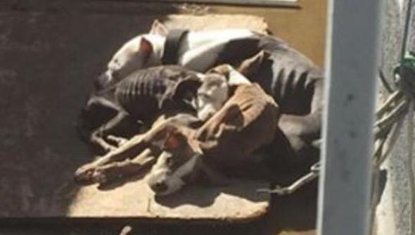 starving dogs pico rivera