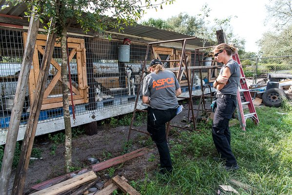 Nearly 100 dogs rescued from Florida puppy mill