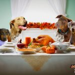 Thanksgiving TV Goes to the Dogs