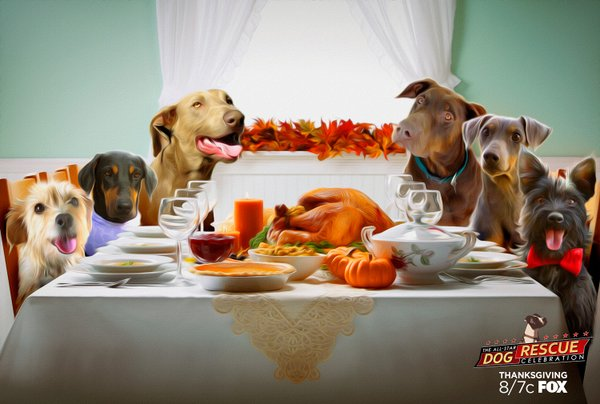 all-star dog rescue celebration thanksgiving special