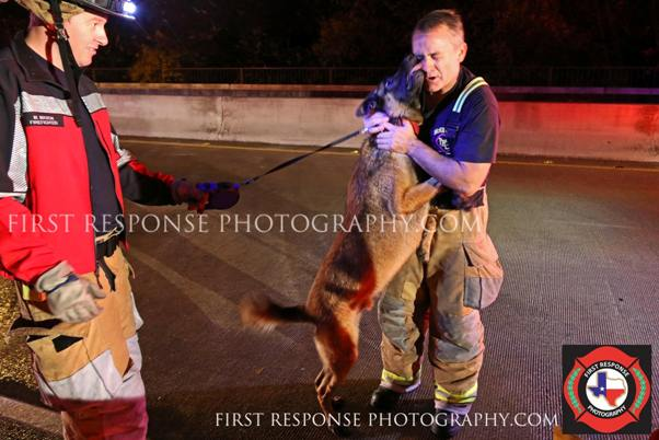 dog thanks firefighter for rescue from floodwaters