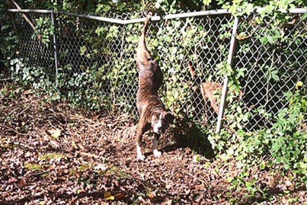 Athena dog trapped on fence
