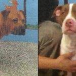 Losers Break into San Bernardino Shelter and Set Dogs Free