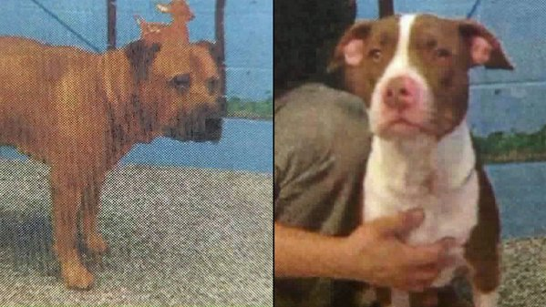 two dogs stolen from San Bernardino shelter