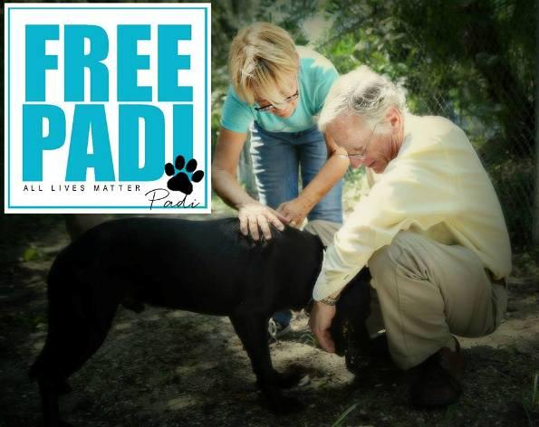 Free Padi Florida dog